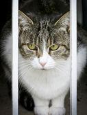 Cat watching — Stock Photo
