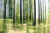 Forest vertical motion blur — Stock Photo