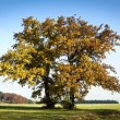 Autumn trees - Stockfoto