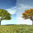 Four seasons tree - Stock Photo