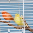 Stock Photo: Pet Birds
