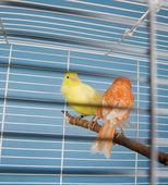 Pet Birds — Stock Photo