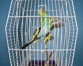 Flying Pet Bird — Stock Photo