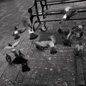 Flying Birds — Stock Photo