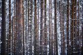 Stromy — Stock fotografie