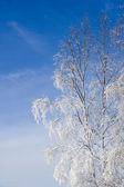 Albero d'inverno — Foto Stock