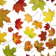 Autumn Leafs — Stock Photo #9293879