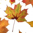Autumn Leafs — Stock Photo #9293920