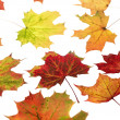 Autumn Leafs — Stock Photo #9293935