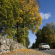 Car in Autumn - Stock Photo