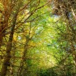 Thick forest hdr — Stock Photo
