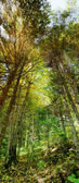 Vertical panorama of thick forest — Foto Stock