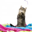 Kitten playing with string — Stock Photo