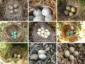 Nests of birds — Stock Photo
