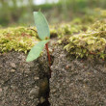 Growing plant — Stock Photo