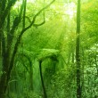 Mossy forest - Stock Photo