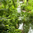 Tropical garden — Stock Photo #8793833