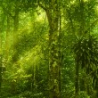 Green forest — Stock Photo #9791454
