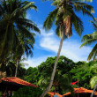Very tall and beautiful coconut tree in SIbu island resort — Stock Photo