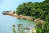 Natural coconut tree on the rocky beach — Stock Photo