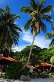 Mycket lång och vacker kokosnöt träd i sibu island resort — Stockfoto