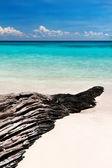 Texturerat hake på stranden — Stockfoto