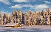 Gegraben in der frostigen winterwald — Stockfoto