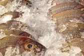 蝴蝶鱼在鱼市场上特写 — 图库照片