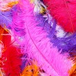 Feather — Stock Photo #8222166