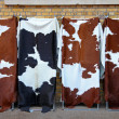 Cowhide — Stock Photo #8770746