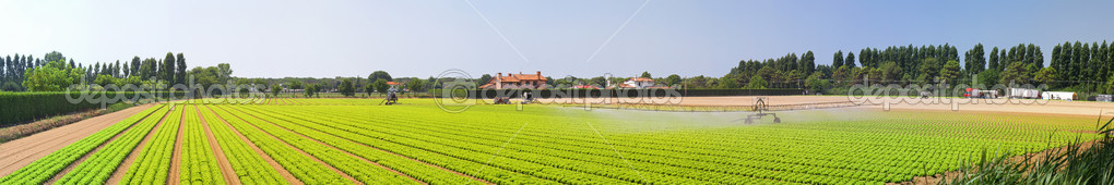 Salad field with water irrigation system panorama — Stock Photo #9135102