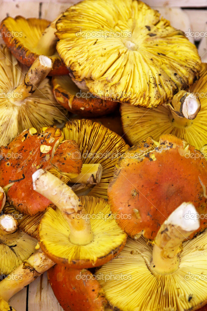 Fresh and wild Chaterelle mushroms at market — Stock Photo #9593427