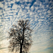 Tree against sunset — Stock Photo