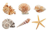 Set of sea shells — Stock Photo