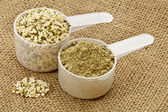Hemp protein powder and seeds — Stock Photo