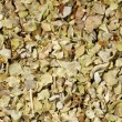 Marjoram seasoning at life-size - Stock Photo