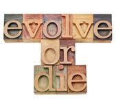 进化或死-进化的概念 — 图库照片