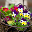 Spring flower basket — Stock Photo