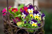 Spring flower basket — Stock Photo