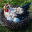 Hen And Eggs — Stock Photo #9669134
