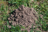 Molehill — Photo