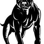 Pitbull dog — Stock Photo #7965888