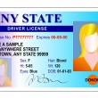 Generic female state driver license - Stock Photo