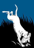 Golden labrador retriever dog head — Stock Photo
