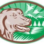 Labrador Retriever Hunting Dog Retro — Stock Vector