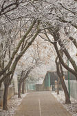 Winter avenue — Stock Photo
