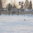 Dog running in the snow — Stock Photo #9276426