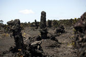 Tree trunks encased in lava flow Hawaii — Stock Photo