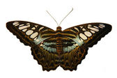 Isolated butterfly — Stock Photo