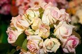 Ассорти из роз — Стоковое фото